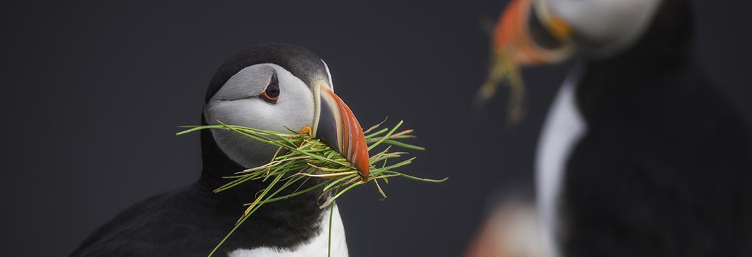 Amanti degli uccelli sito di incontri