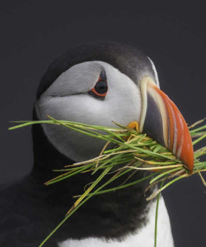 Whale Watching & Puffin Tours