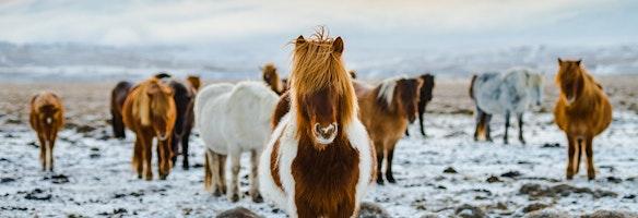 Paardrijtochten