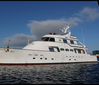 Whale Watching on board a luxury yacht