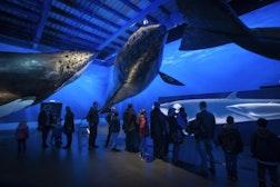 雷克雅未克鲸鱼博物馆