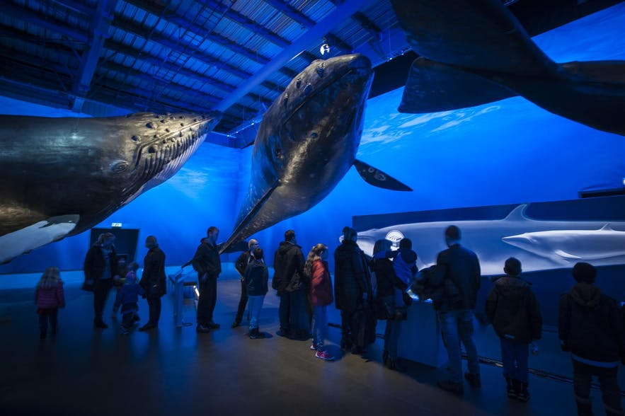 Whales of Iceland has 23 life-sized models.