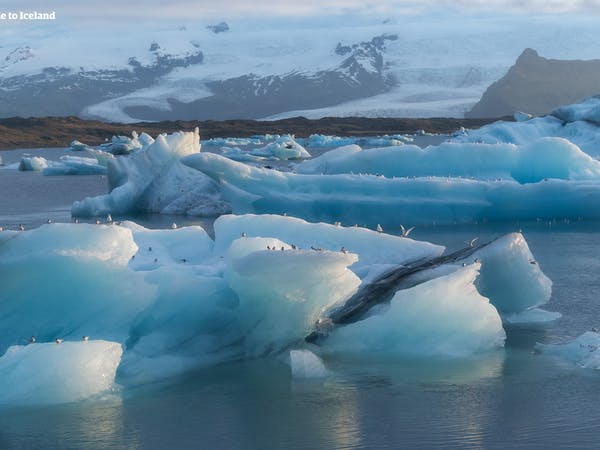 Fjallsárlón, Iceberg lagoon