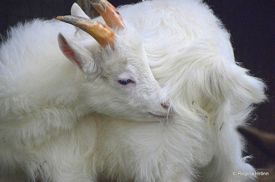 Daladýrð Petting Zoo