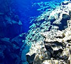 As the cleft is remarkably clear, the light manages to shine further down than in most other diving spots.