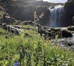 Des myosotis poussant près d'une petite cascade, à l'est de l'Islande.