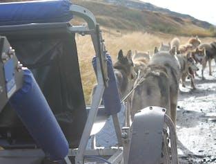 Husky Dog Kart From Akureyri | North Iceland