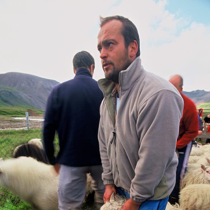 在圈羊节期间会看到许多年轻的冰岛人带着羊回到他们的羊圈