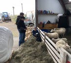 The farm animals are always up for a cuddle, some more than others though!