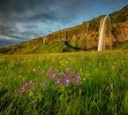 Die grünen Felder rund um den Seljalandsfoss tragen die leuchtenden Farben des nordischen Sommers.