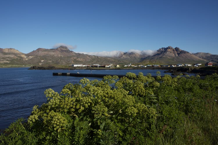 Borgarfjörður Eystri fjord on a sunny day.