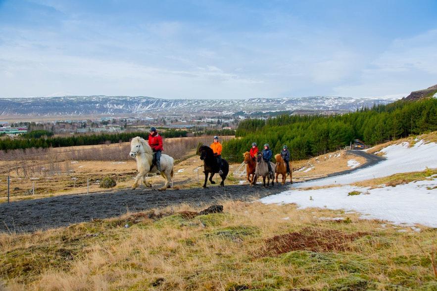 在冰島騎冰島馬