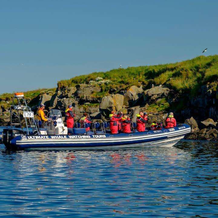 レイキャビク発|RIBボートで行くパフィンウォッチングツアー(午後出発有)