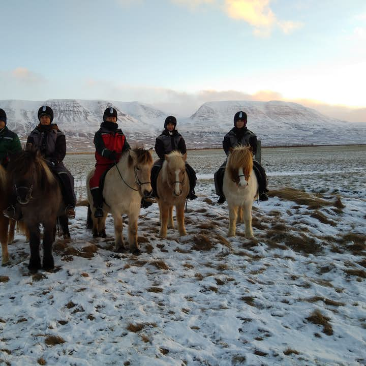 Scenic 1.5 Hour Winter Horseback Riding in the Countryside of North Iceland