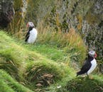 Vestmannaeyjar are one of the most populous puffin nesting areas in Iceland.