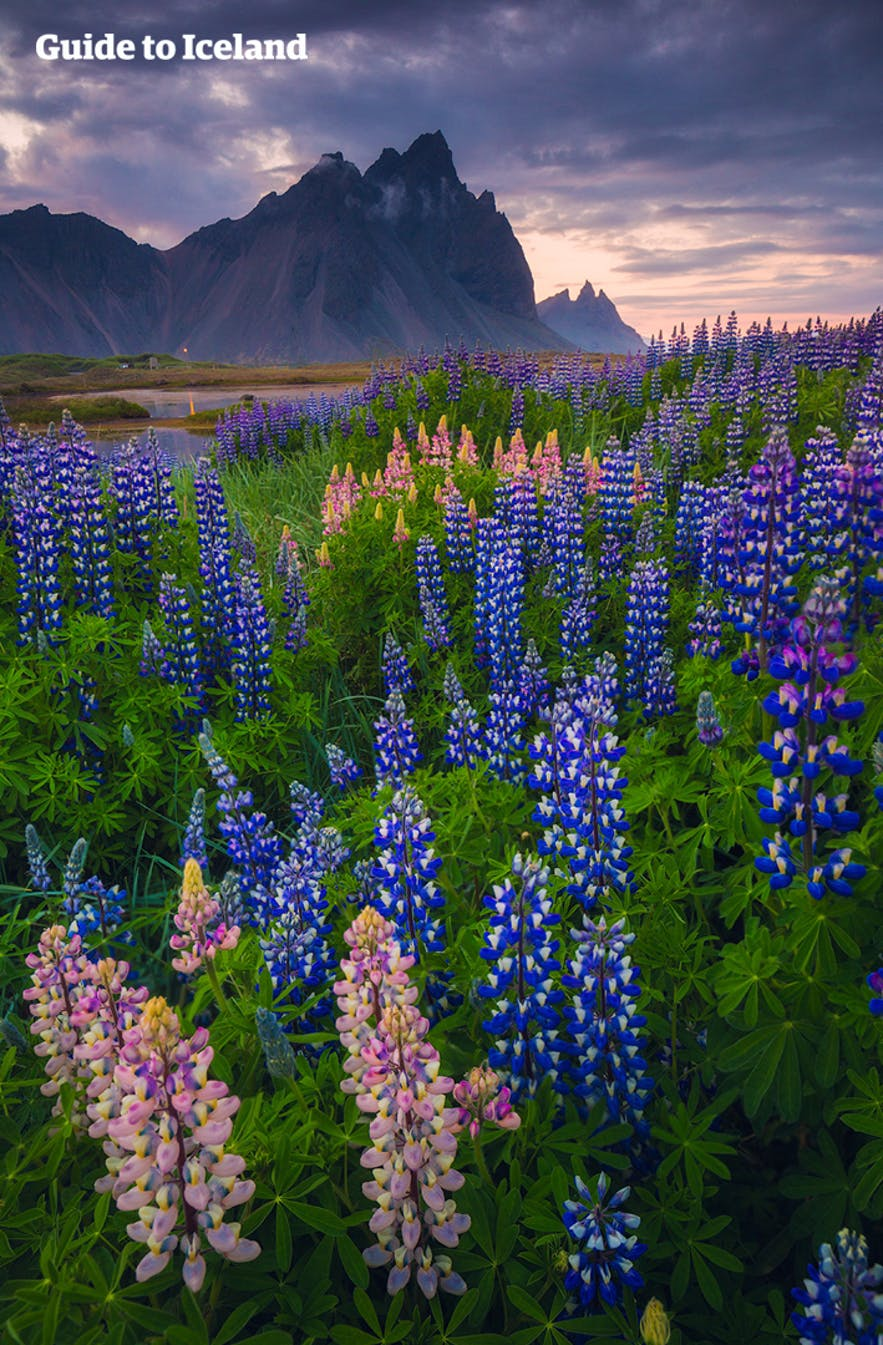 Vestrahorn is the Batman Mountain in south-east Iceland.