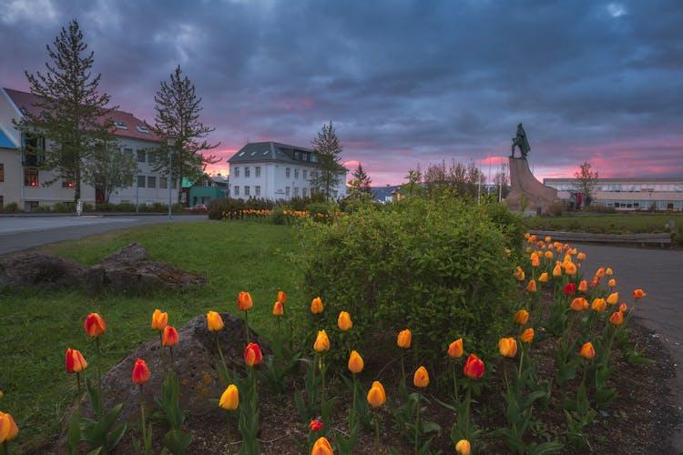 Tulipes sur la place de l'église Hallgrímskirkja, une nuit d'été.