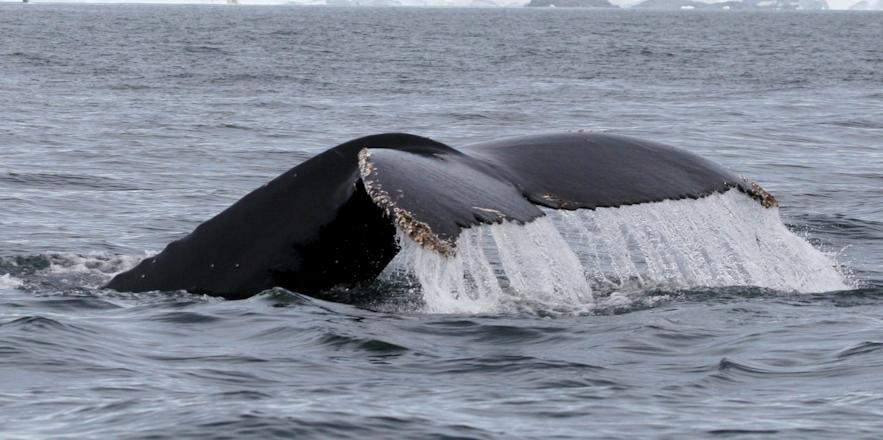 斯奈山半島出發觀鯨旅行團