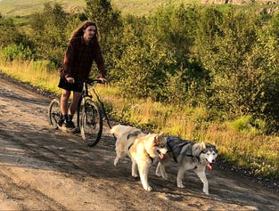 Dog Sledding with Husky on Scooter  Akureyri, North Iceland