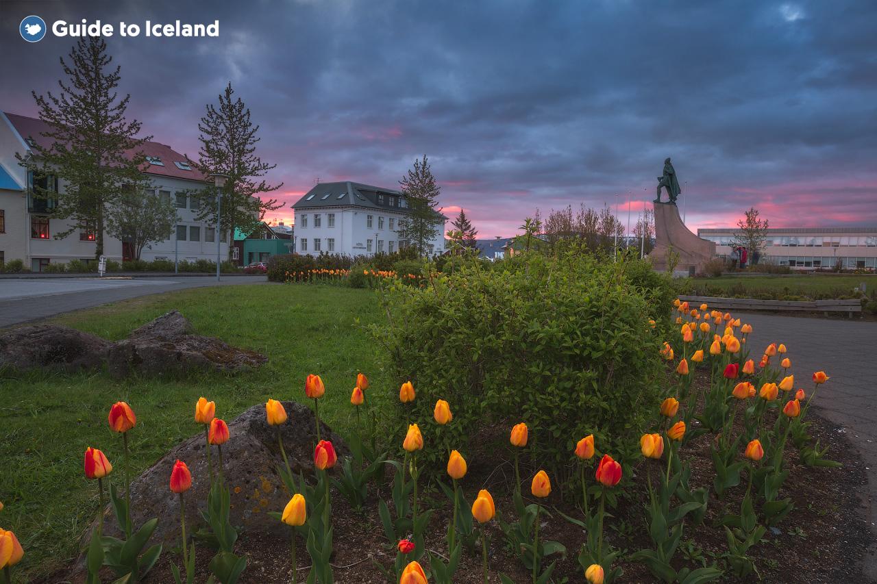 Flores en un parque en el centro de Reikiavik.