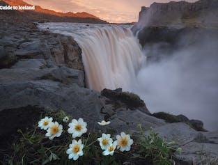 11일 여름 여행 패키지 | 현지 가이드와 함께하는 아이슬란드 링로드 일주