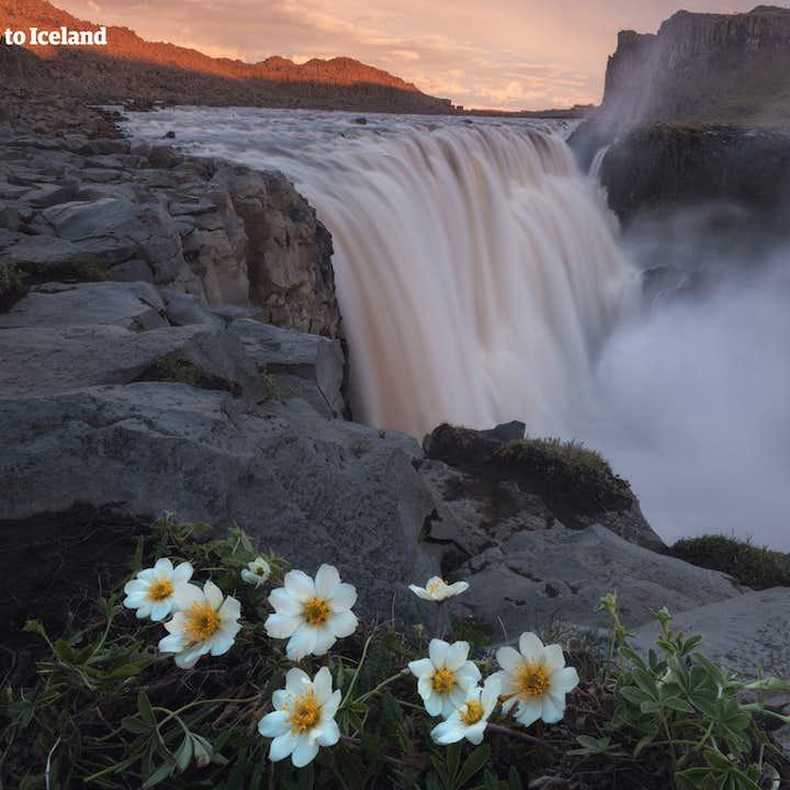 แพ็คเกจ 11 วันฤดูร้อน  | รอบถนนวงแหวนของประเทศไอซ์แลนด์พร้อมไกด์ท้องถิ่นที่มีประสบการณ์