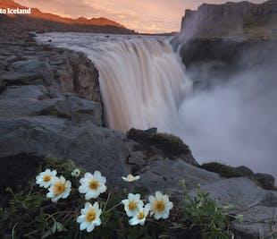 11-дневный летний пакетный тур | По Золотому кольцу Исландии с опытным местным гидом