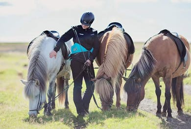 Under The Volcano   4-5 Hour Horse Riding Tour in South Iceland