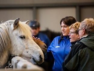 Meet the Icelandic Horses | Stable Visit in South Iceland