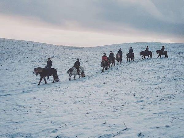 Icelandic HorseWorld
