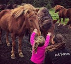 This is the best tour possible for meeting Icelandic horses.