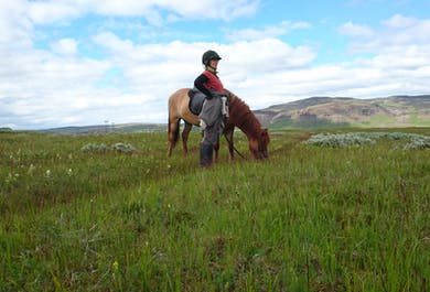 Horse Riding in Iceland's Nature | 5-Hour Tour