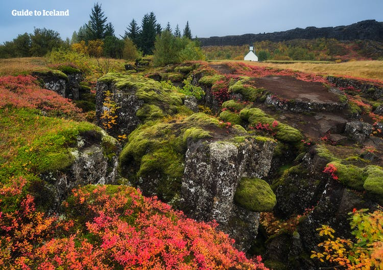 Moss-covered lava fields at Þingvellin National Park which is one part of the famous Golden Circle route.
