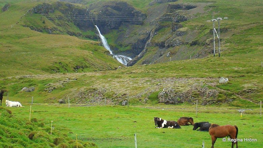 Kvernárfoss waterfall and Icelandic horses at Kverná farm