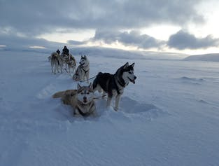 Dog Sledding & Snowmobile Combo at Lake Myvatn