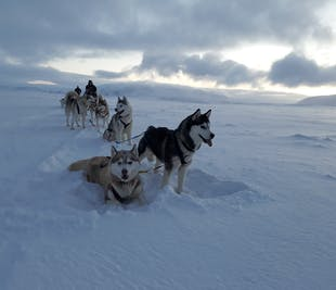 Dog Sledding & Snowmobile Combo at Lake Myvatn