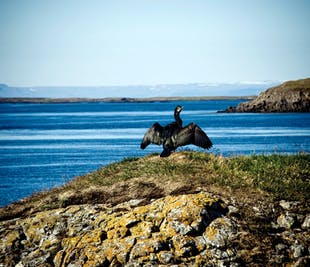 ウェストフィヨルドからスナイフェルスネス半島に行くバルドゥル・フェリー