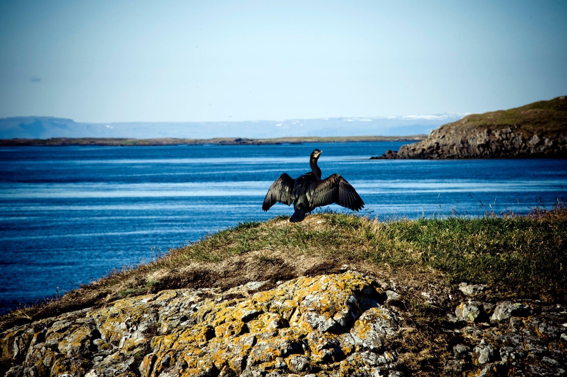 The many islands of Breiðafjörður bay are home to seabirds.