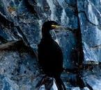 Iceland has many species of seabird, especially in summer.