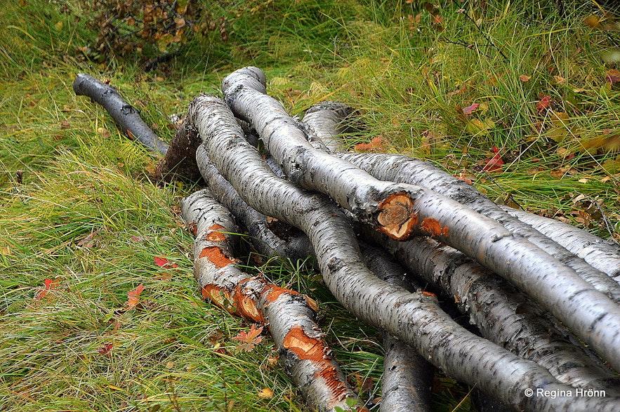 Wood cutting in Fnjóskadalur