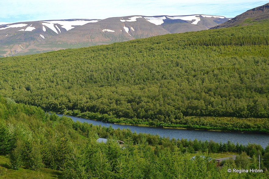 Vaglaskógur forest