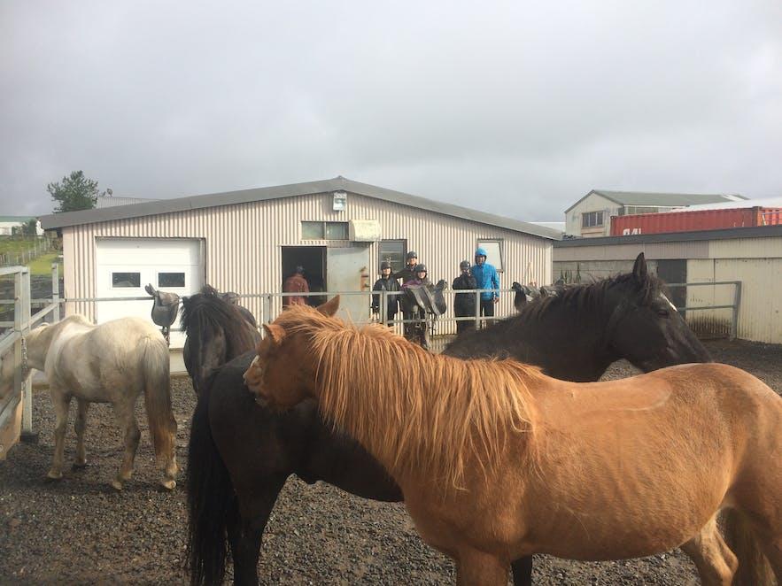 馬たちの様子を見学