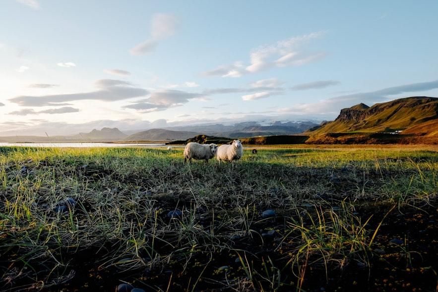 冰島5月初夏的景色
