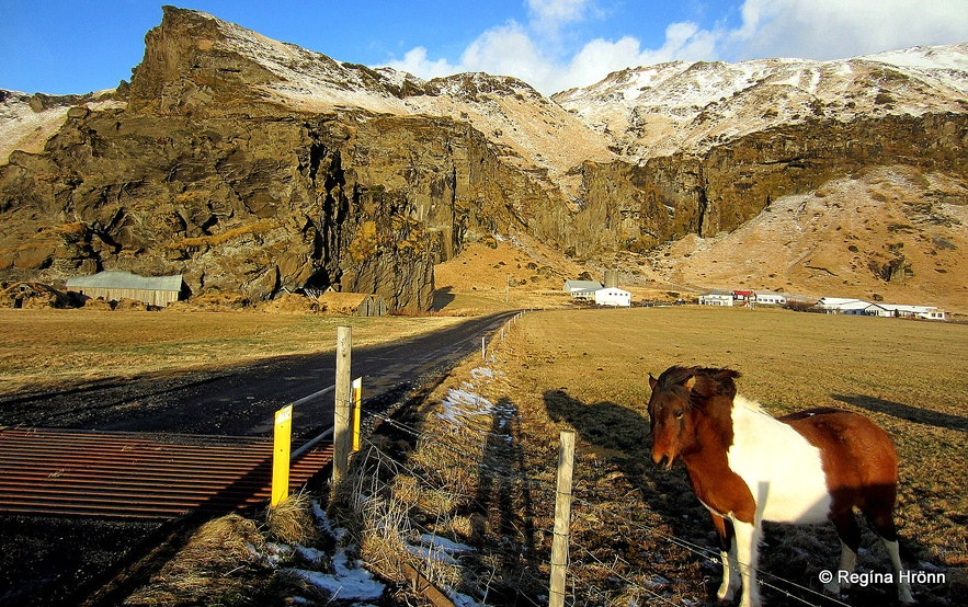 Horses by Drangshlíð farm South-Iceland