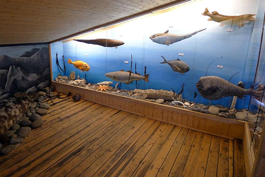 内斯克伊斯塔泽镇上的博物馆