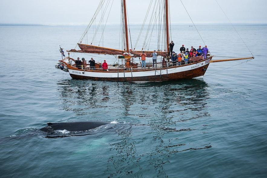 鯨にであえる迫力の瞬間は一生忘れられない思い出になること間違いなし