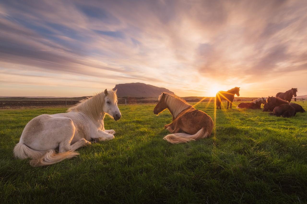夕阳是冰岛的夏季摄影的黄金时段,可以拍摄出如诗如画的北部瀑布美景