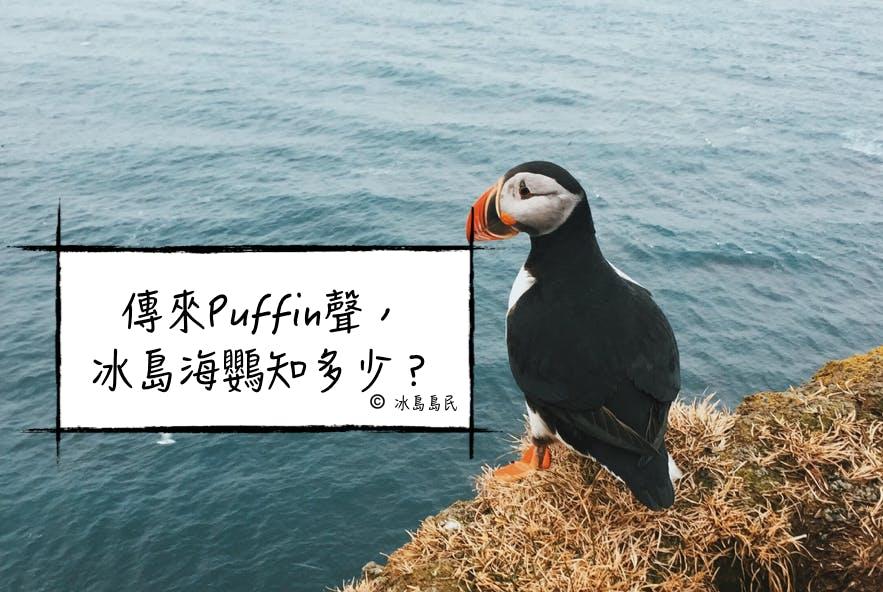 冰島國鳥海鸚Puffin全攻略——什麼時候看、哪裡看