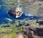 Your tour guides will help you capture this magical and unique snorkelling experience in a photo to last a lifetime.