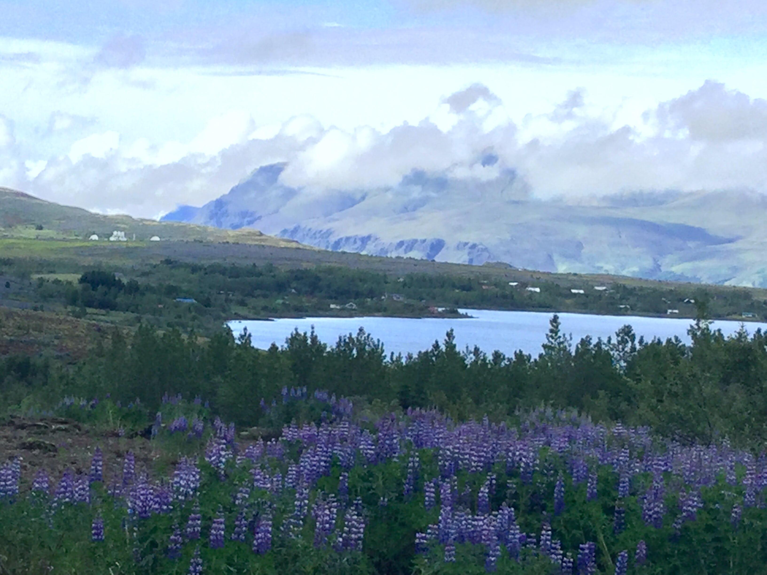 A lake just outside of Reykjavík city.
